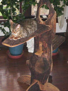 Slab Cat Tree