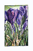 """Crocus"", by Studio C"
